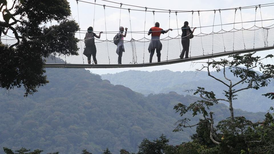 The Nyungwe National Parc's Canopy Walkway