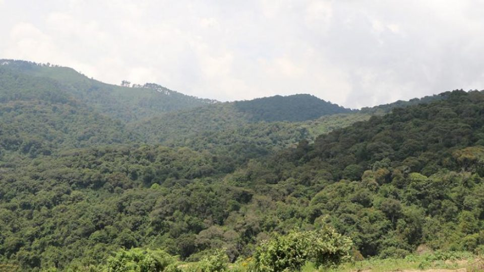Gishwati Mukura National Park
