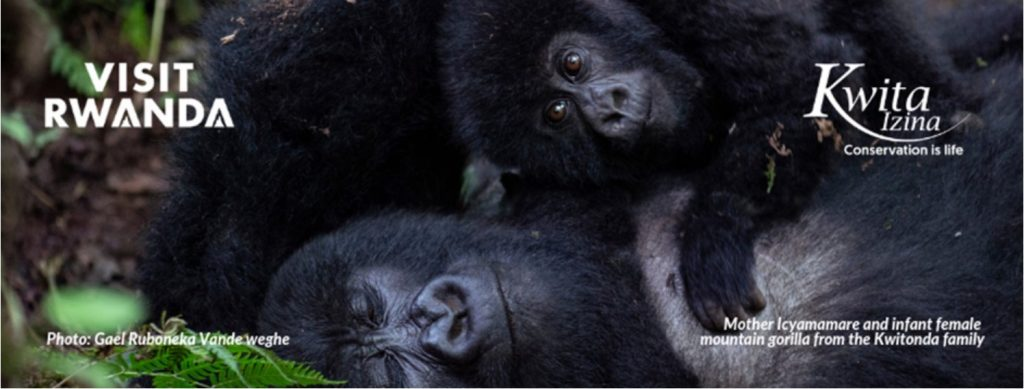 Mother Icyamamare and infant_Gorilla Naming Poll National Geographic